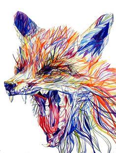 Fox in coloured pencil - claudine o sullivan