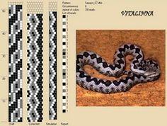 black & grey snake