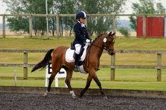 Milly riding at Frys Novice Dressage competition