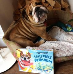 """""""Stanley loves his book, thank you!"""" - Linda Backhouse  Head on over to http://www.petlandia.com  to get your own personalised pet book!"""