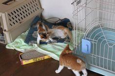 里親さんブログ2年前のママ - http://iyaiya.jp/cat/archives/80257