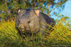 Australian Fauna - Steve Parish Nature Connect