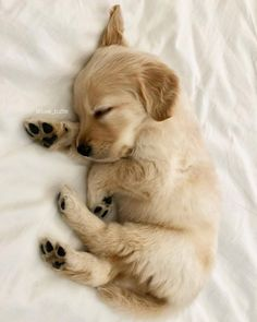 tiny sleeping Golden Retriever puppy & cute animal pictures 10 Adorable Puppies Playing In. The post 10 Adorable Puppies Playing In Their First Snow [PICTURES] & Dogtime appeared first on Travers Rottweilers. Cute Little Animals, Cute Funny Animals, Cutest Animals, Funny Dogs, Cute Dogs And Puppies, Adorable Puppies, Doggies, Cute Pups, Small Puppies