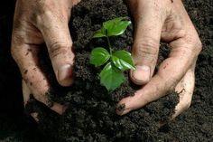 Ingrasamant natural este exact ceea ce iti trebuie pentru a cultiva propriile legume si fructe sanatoase si lipsite de aditivi. Ingrasamant natural preparat