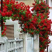 pin von rumana auf bonsai flowers gardening pinterest. Black Bedroom Furniture Sets. Home Design Ideas