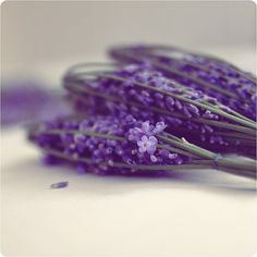 Lavender Wands....love the intense color.