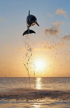 Dolphin flying high