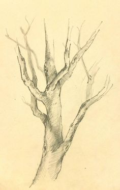 Unknown, French Pencil Drawing of Tree, Circa 1920 Tree Trunk Drawing, Tree Drawings Pencil, Branch Drawing, Landscape Pencil Drawings, Drawing Trees, Drawings Of Trees, Tree Pencil Sketch, Pencil Drawings Of Nature, Paintings Of Trees