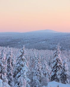"""""""I swear to you, there are divine things more beautiful than words can tell"""" Finnish Lapland. Photo by @virpula"""