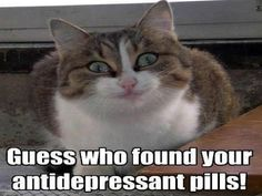 Grumpy Cat Humor | Guess who found your antidepressant pills! From Larry Hiatt on Google+