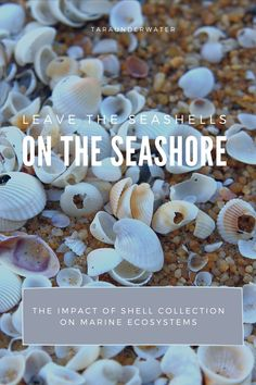Collecting seashells from the beach can have a greater impact than you might think. Learn about how hermit crabs and octopus use empty shells as protection and shelter. I have also linked an interesting research paper about how shell collection has increased over the years along with tourist seasons. Enjoy! Leave a comment!  marine biology  marine biologist  seashells  shells  ecosystem  hermit crabs  octopus  Dream Career, Dream Job, Marine Ecosystem, Hermit Crabs, Shell Collection, Biologist, Marine Biology, Educational Activities, Seashells