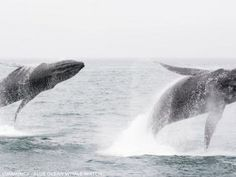 Synchronized whale breach: shot of a lifetime - GrindTV.com