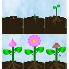 Plant Growth Sequencing