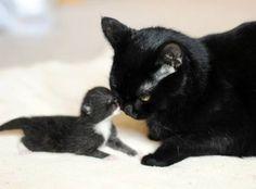 Kitten and Momma