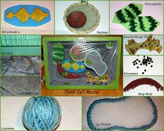 7th Grade Science: Plant Cell Model  (foam cooler, yarn, plastic web, drapery cord, beads, wired ribbon, cross stitch hoop, tulle, button, saran wrap, felt, craft paint) - ELH 11/6/2012  Check out www.NYHomeschool.com as well. Science Cells, Plant Science, Science Biology, Science Fair, Science Lessons, Life Science, Science Ideas, 7th Grade Science, Middle School Science