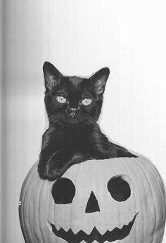 Vintage Halloween photo - chillist black cat ever in pumpkin