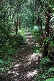 Bird Wood Gully bush walk
