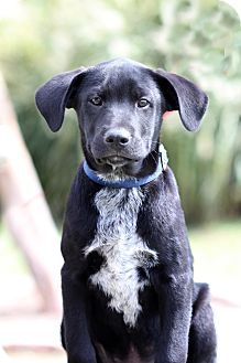 DFA RESCUE ACROSS THE NATION; Rescue info: Natchitoches, LA -Meet Elvis a Puppy for Adoption.