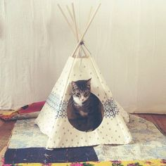 Kitty teepee. oh my gosh. nope this will be London's bed. kitty can have up…