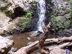 Cascada tras troncos secos