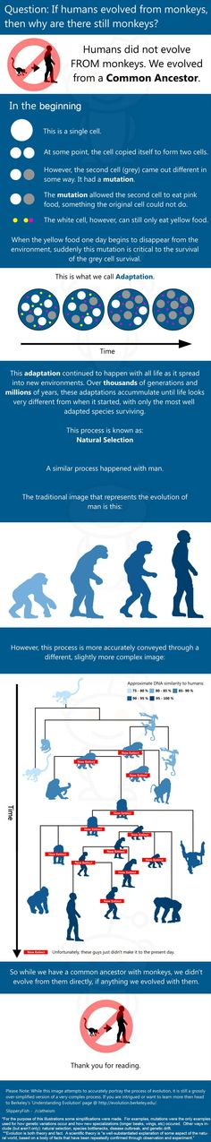 """If man evolved from monkeys, why are there still monkeys?"" Answer in this infographic."