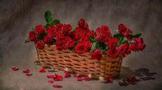 bucket+full+of+red+roses+to+express+love+hd+wallpaper.jpg (1366×768)