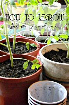 How to Regrow Fresh Produce