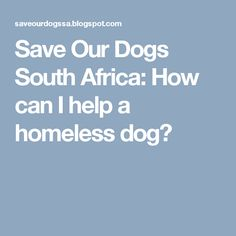 Save Our Dogs South Africa: How can I help a homeless dog?