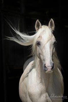 a lady... #horses