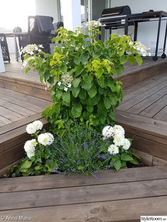 Altanbygge med tak och insynsskydd med smala fönster. Nu fortsätter vi med utekök och pool! - Hemma hos Happy1 Deck Stairs, Plants, Image, Plant, Deck Steps, Planets