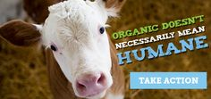 Tell the USDA to Improve Organic Animal Welfare!!!!  Petition DEADLINE LOOMING!   Did you know the USDA Organic label does not necessarily mean animals raised for food were treated humanely? PLEASE HELP NOW!!!!  https://secure.aspca.org/form/higher-usda-standards?ms=em_ade_USA-organics-article-advocacy-alert-20160605