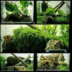 Terrarium Decor Arachnidism Vivarium Tropical