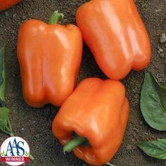 Pepper Orange Blaze F1
