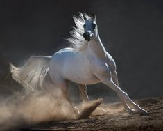 The beauty and grace of horses in the photos by Wojtek Kwiatkowski 17