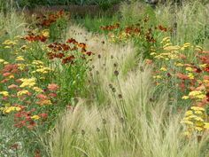 This traditional prairie planting consists of fiery Achillea and Rudbeckia and airy Stipa tenuissima, which creates movement as it sways in the wind. Influenced by American prairies, this style is popular due to its spectacular display of brightly colored flowers, low maintenance, and drought tolerance.