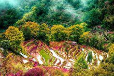 Yunnan maakunta sijaitsee Kiinan etelärajalla.