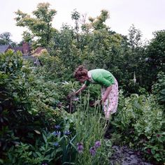 Want a landscape that's both beautiful and productive? That's called an edible garden, and here's how to make one.