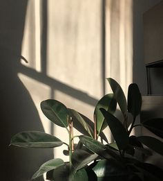 A Complete Guide to Lighting For Your Indoor Plants + Quiz Plant Aesthetic, Nature Aesthetic, Flower Aesthetic, White Aesthetic, Aesthetic Photo, Aesthetic Pictures, Aesthetic Pastel Wallpaper, Aesthetic Backgrounds, Aesthetic Wallpapers