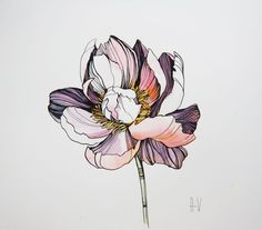 """Peony Ink drawing by Alla Vlaskina - """"Peony"""" by Alla Vlaskina. Ink drawing on Paper, Subject: Flowers and plants, Expressive and ges - Watercolor And Ink, Watercolor Flowers, Watercolor Paintings, Watercolour Drawings, Botanical Drawings, Botanical Art, Peony Drawing, Flower Art Drawing, Floral Drawing"""