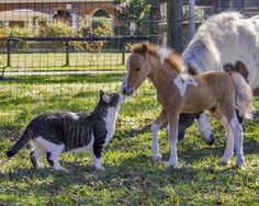 new friends..... http://www.encorefarms.com/index.php/sales-horses/stallions-and-colts/