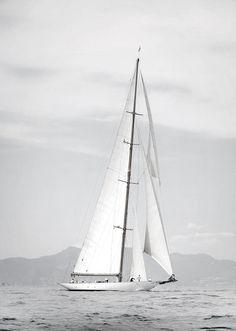 sailing, sails, sea