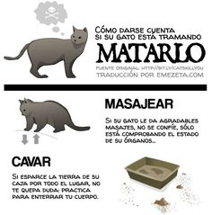 :INGLIP:  http://www.emezeta.com/articulos/como-darse-cuenta-si-su-gato-esta-tramando-matarlo#axzz1pTzd32A4