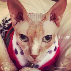 Sphynx Cat Fleece Clothes / clothes for cats/ cat overalls /cat shirt/ cat sweater/ cat sweatshirt/ pet sweater/ Sphynx cat clothes/ Sphynx clothing / cats clothes/ shirt for cat/ cat clothes/ tattoo/ skull/ designer cat clothes/ cat pjs