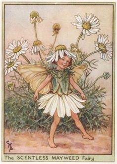 Scentless-Mayweed-Fairy-by-Cicely-Mary-Barker-Wayside-Flower-Fairies-c1948