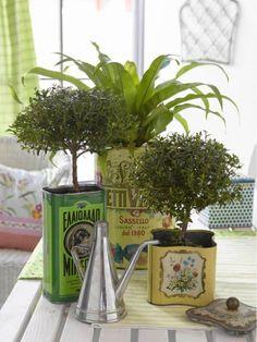 Topiary Tins Oldschoolowe pojemniczki w roli doniczki