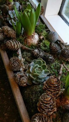 Her i weekenden fandt jeg den gamle stjernekasse frem fra gemmerne. I kassen har… This weekend I found the old star box from the store. In the box I made a decoration of a forest floor . Christmas Time, Christmas Wreaths, Christmas Crafts, Xmas, Plant Aesthetic, Iris Flowers, Outdoor Christmas Decorations, Christmas Inspiration, Plant Decor