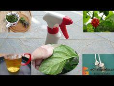Jak vyrobit postřik z česneku proti mšicím, molicím a plísním. Spray Bottle, Outdoor Gardens, The Creator, Garlic, Flora, Youtube, Gardens, Plants, Airstone