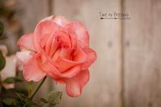 Soft Pink Vintage Rose PrintFlower by TimeisPreciousPhotos on Etsy