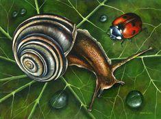 Seashell Painting, Snail Shell, Shell Jewelry, Shell Pendant, Sea Shells, Illustration, Poster, Hand Painted, Olsen
