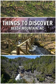 Things to Do in and Near Beech Mountain, North Carolina - Beech Mountain Hikes Beech Mountain North Carolina, Banner Elk North Carolina, North Carolina Mountains, Maggie Valley North Carolina, Boone North Carolina, Linville Falls, Blowing Rock Nc, North Carolina Vacations, Nc Mountains